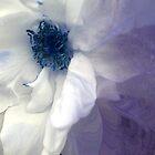 Blue Rose by Anivad - Davina Nicholas