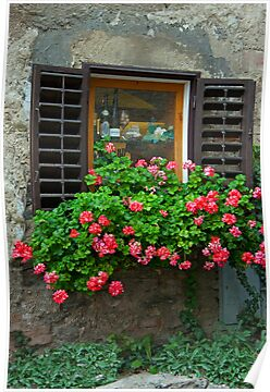 Shutters And Geraniums by phil decocco