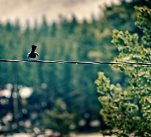 Bird on a Wire by enlightenedscrp