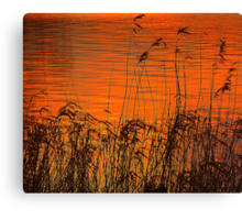 Sunset On The Lough Cowey Reed Beds Canvas Print