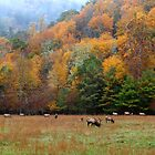 autumn in the valley of the elk by J.K. York