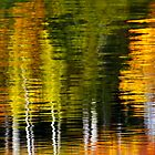 Abstract Trees Water Reflection by Jamie Roach