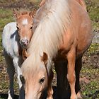 Jewel and Jigsaw by fenwickstud