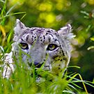 SNOW LEOPARD~~***VERY ENDANGERED*** by Sassafras