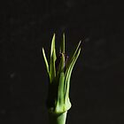 Goodbye, Salsify by Jan Clarke