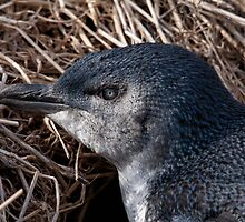 Little Penguin by mosaicavenues