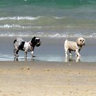 dog beach 9 by Zefira
