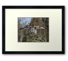 Ready or not here I come Framed Print