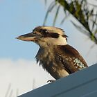 Laughing Kookaburra - Quite Silent by stevealder