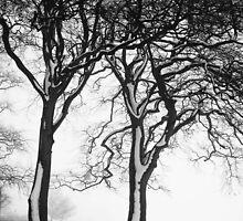 A winters tale by Yorkspalette