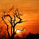 Londolozi Magic! by jozi1