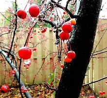 Berry Tree After The Rain by Rebekka Reynolds