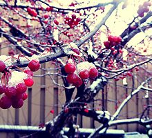Berry Tree After The Snow by Rebekka Reynolds