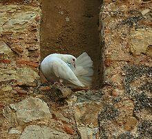 Ella es ......una blanca paloma ...... by cieloverde