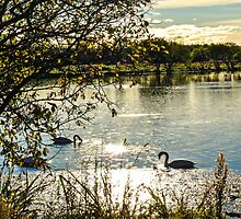 Autumnal Lagoons with Swans by VFPhotography