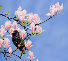Starling on Magnolia by Roger Bolden