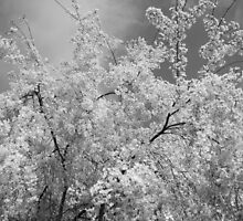 Infrared for Days by Emily Klingler