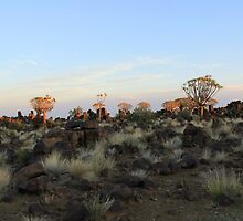 Quiver Tree Forest at Dusk by JenniferEllen