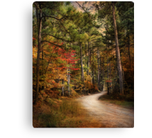 Autumn Forest 2 Canvas Print