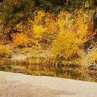 Hello Autumn Panorama by Diane Schuster