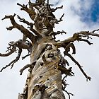 Skeletal Tree with Clouds by studiojanney