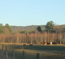 Mooing and grazing, grazing and mooing by Kriiistamarie