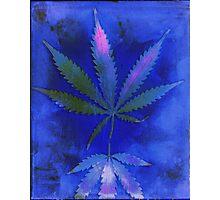 Hemp Lumen #2  Marijuana, Cannabis Photographic Print