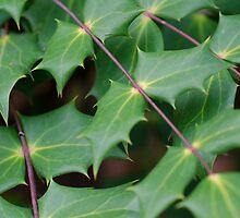 Leaf by Melissa Yukura