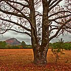 Rustic Pinnacle Mountain by Lisa G. Putman