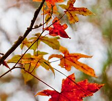 Autumn's Finest by Lisa G. Putman