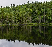 Still Forest Lake Reflections - Charlevoix, Quebec, Canada by Georgia Mizuleva