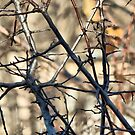 """Barely"" Dressed Branches by kenspics"