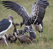 Feast on the Serengeti by Braedene