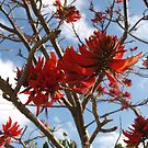 Coral Tree by kalaryder