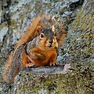 Cute Little Squirrel by Keala