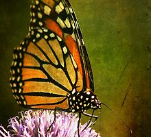 Monarch Butterfly by CindiR