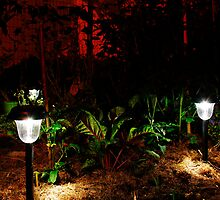 Garden Solar Lights in the Dark by jojobob