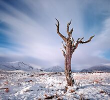 Rannoch moor tree by Photo Scotland