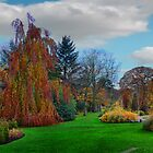 Autumn Panorama by Colin Metcalf