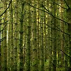 The Forest - Northern Ireland by mattnnat