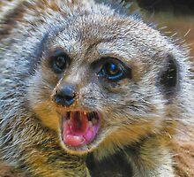 Meerkat by Tom Newman