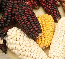 Black Red Yellow and White Corn by rhamm