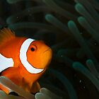 Under the Sea by Kenji Ashman
