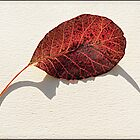 Leaf Shadow by Heather Buckley