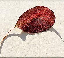 Leaf Shadow by Heather Buckley