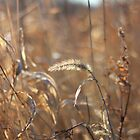 Grasses by AbigailJoy