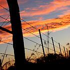 Sunset Fenceline 2 by AbigailJoy