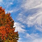 Autumn Sky by Cee Neuner