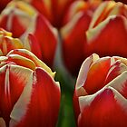 Red Tulips by Cee Neuner