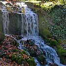 A Small Waterfall In West Dorset  by lynn carter